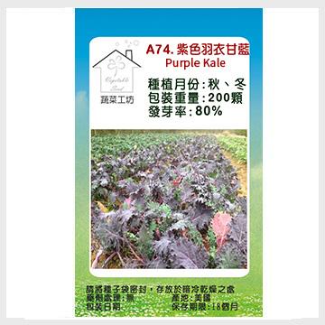 【蔬菜工坊】A74.紫色羽衣甘藍種子