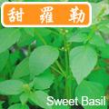 【香草植物】甜羅勒種子~Sweet Basil Seed