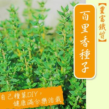 【香草植物】百里香種子~Thyme seed