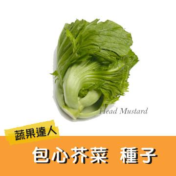 【蔬果達人】包心芥菜種子~Head Mustard seed